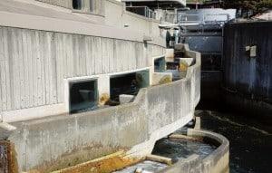 Seattle Aquarium: Salmon Ladder