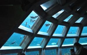 Seattle Aquarium: Underwater Dome