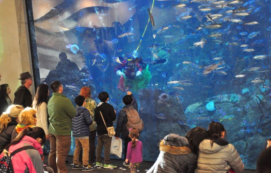 Seattle Aquarium: Window On Washington Waters
