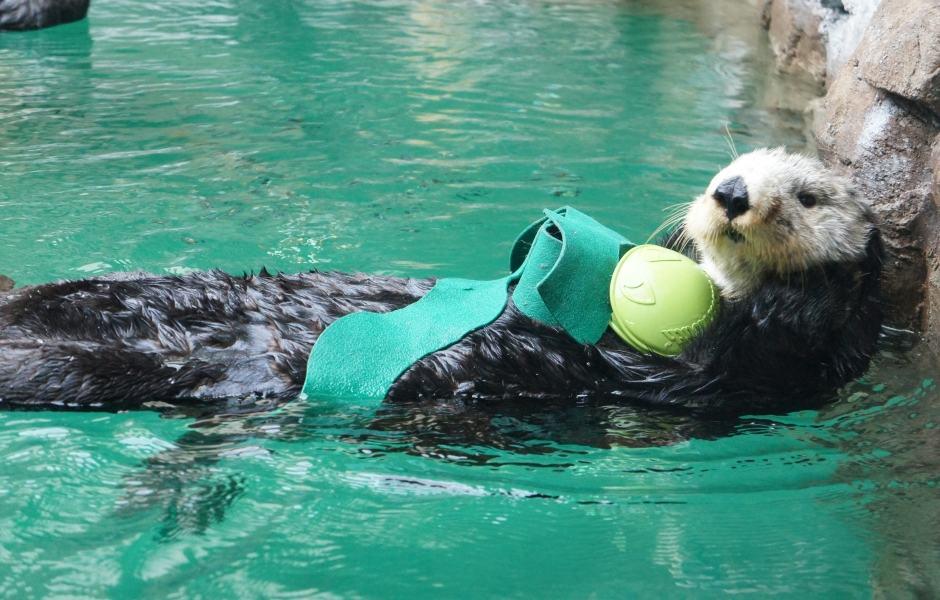 Seattle Aquarium: Lontra