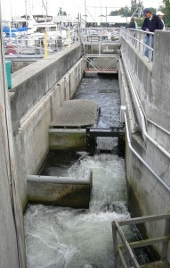 Ballard Locks: Fish Ladder