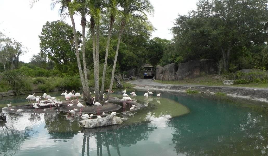 Viagem a Disney também tem Safari no Animal Kingdom